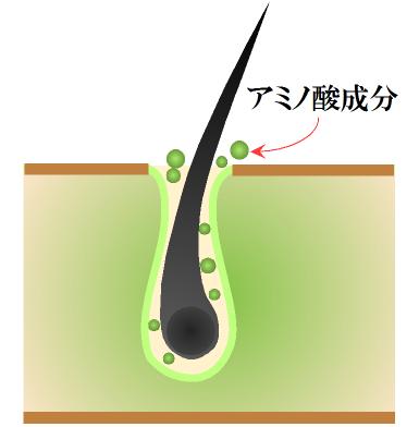 黒にんにくエキス・アミノ酸が浸透